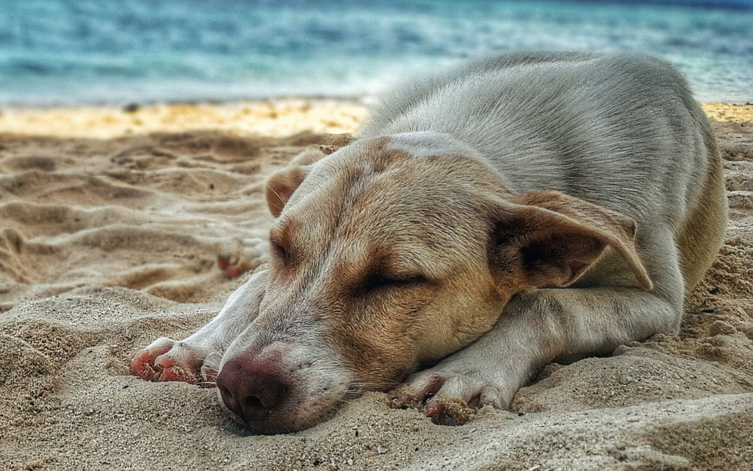 Caught Up in the Dog Days of Summer?