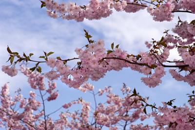 Ahh . . . Spring!